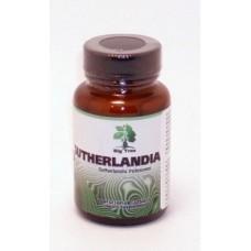 Sutherlandia frutescens 60 kaps