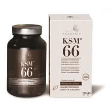 Harmonia KSM66 120 kaps